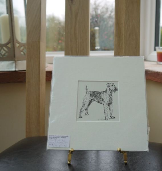 Airedale standing - Air O3 -1960's print by Bridget Olerenshaw